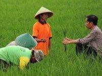 Pemerintahan Jokowi Sengaja Mendesain Penghancuran Petani